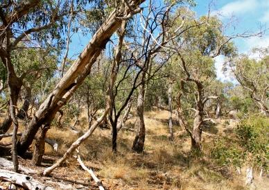 Bone Dry Australian Landscape.