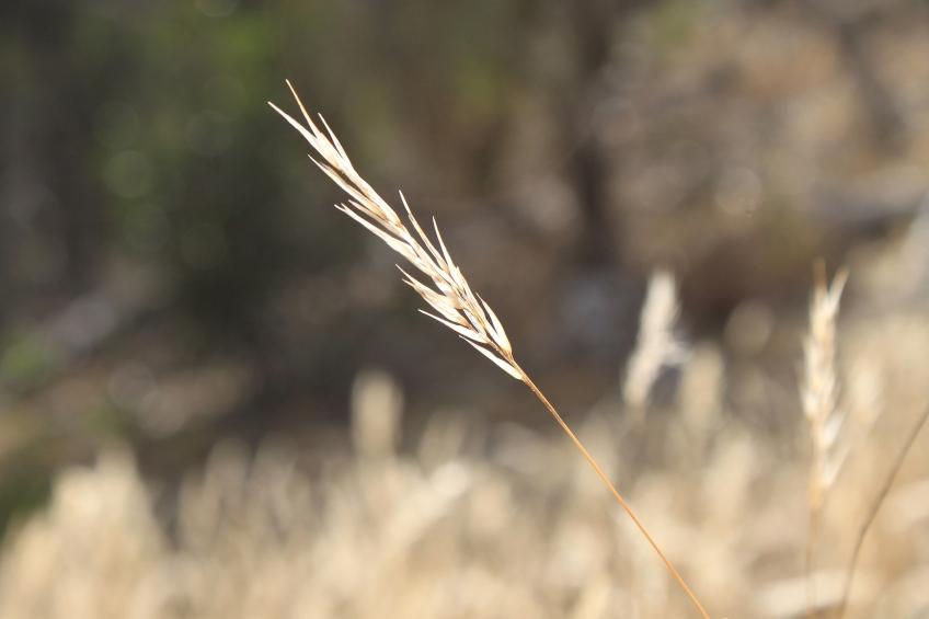 Single blade of grass.