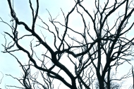 Winter Tree Branches.