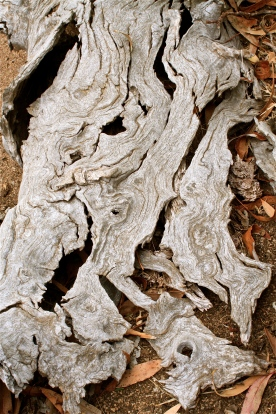Gnarled tree bark.