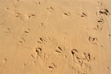 Bird feet prints in the sand.