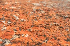 Orange lichen on rock.