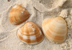 Sea shells on the sand.