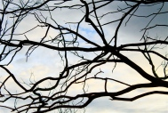 Intertwined branches.
