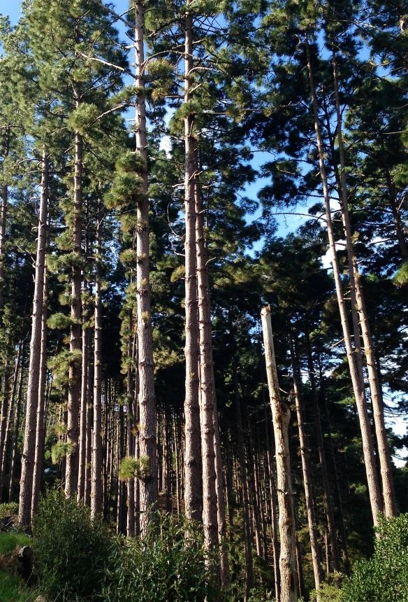 Tall trees.