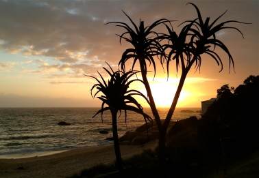 Sunset palm silhouettes in Camps Bay.