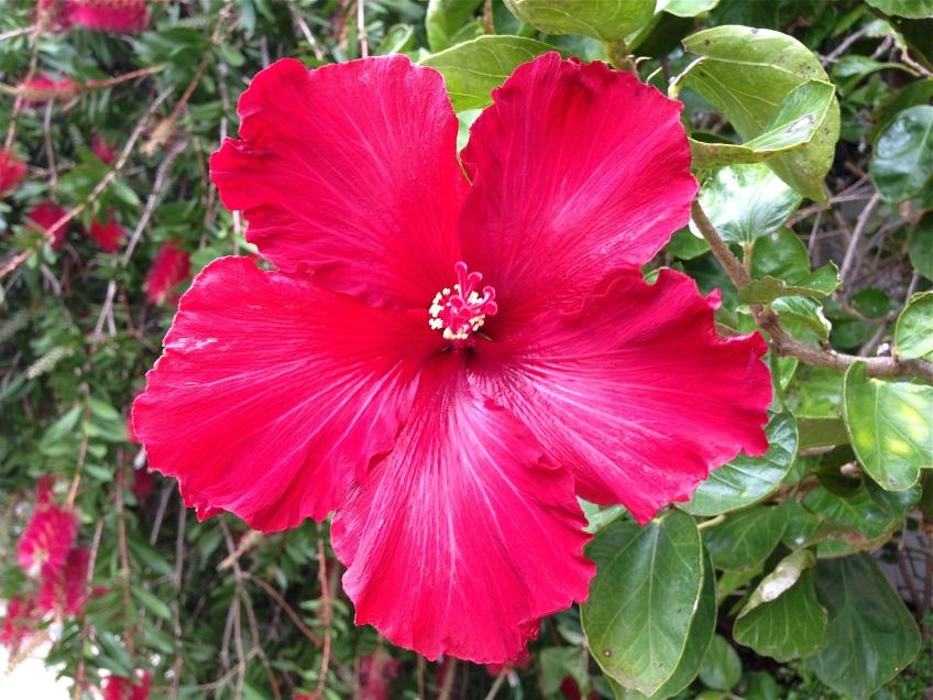 Red flower.